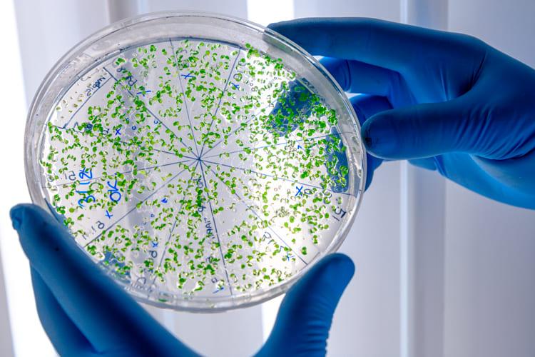 La Importancia de los Análisis Microbiológicos